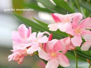 20140803花①