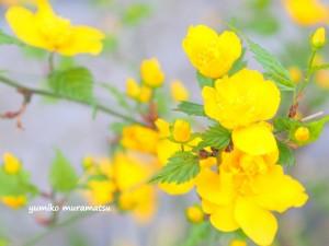 20140412 黄色いお花 3